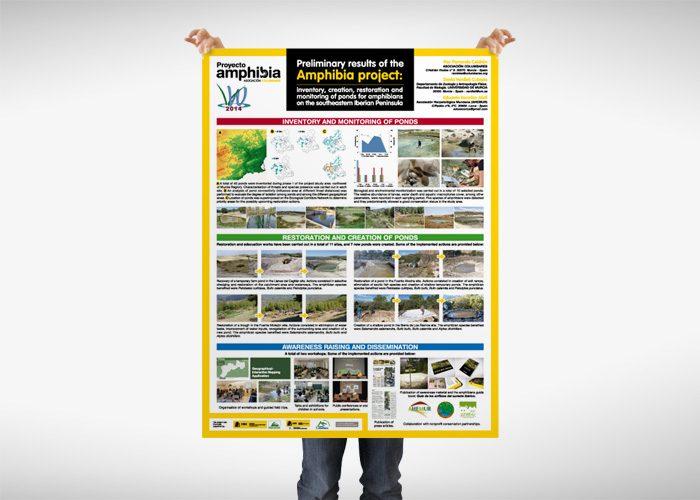 10-detiketa-estudio-creativo-guia-anfibios-sureste-iberico-proyecto-amphibia-columbares-poster-congreso