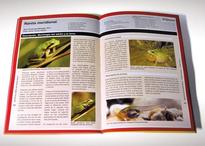 5-detiketa-estudio-creativo-guia-anfibios-sureste-iberico-proyecto-amphibia-columbares-maquetacion
