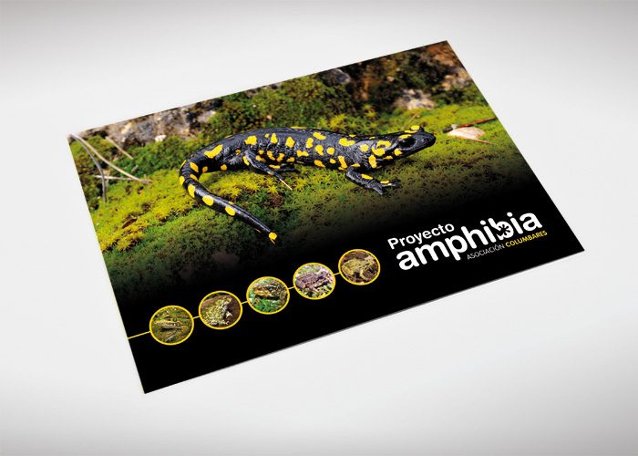 7-detiketa-estudio-creativo-guia-anfibios-sureste-iberico-proyecto-amphibia-columbares-folleto