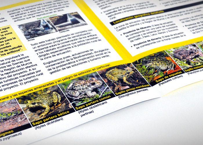 8-detiketa-estudio-creativo-guia-anfibios-sureste-iberico-proyecto-amphibia-columbares-interior-folleto