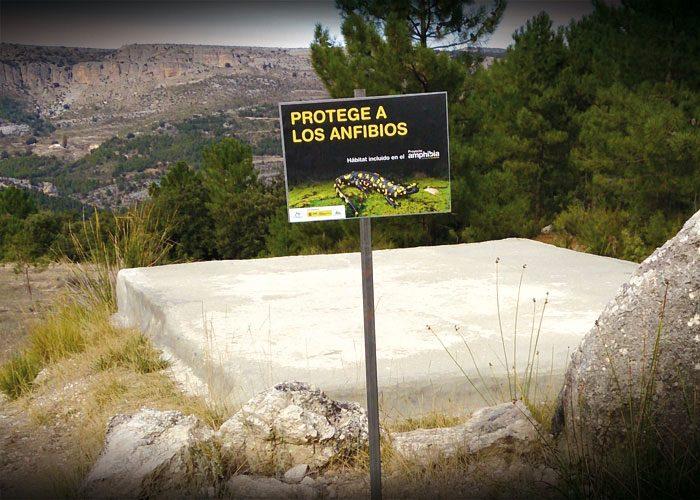 9-detiketa-estudio-creativo-guia-anfibios-sureste-iberico-proyecto-amphibia-columbares-cartel-balsa