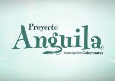 1-detiketa-estudio-creativo-proyecto-anguila-asociacion-columbares